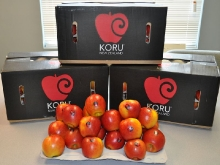 KORU® Plumac c.v. received for New York Market 2012