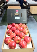 KORU® Plumac c.v. 2013 Wairepo Orchards