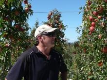 Simon Easton, Wairepo Orchards