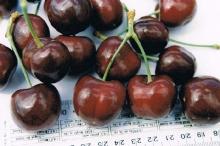 Cherry-SweetValentine 700x467