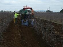 DiggingTrees2013