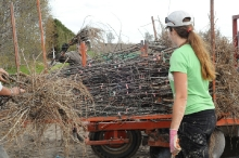 28-trees delivered to orchard 20140718 1929891348