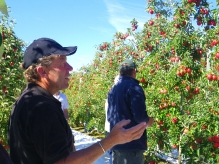 KORU® Plumac c.v.-Wairepo Orchards 2011